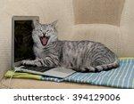 Cat And Notebook. A Cat Sittin...