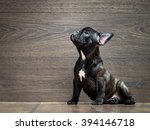 Stock photo french bulldog puppy puppy black the dog sits at the wooden wall thoroughbred elite puppy 394146718