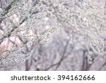 beautiful branches of white... | Shutterstock . vector #394162666