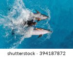 dolphins playing in the pool on ... | Shutterstock . vector #394187872
