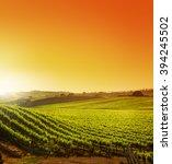 Hillside Vineyard At Sunset