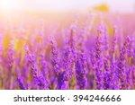 beautiful colors purple... | Shutterstock . vector #394246666