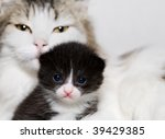 Two Cats  Mother And Her Kitten