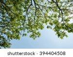 green leaves background | Shutterstock . vector #394404508