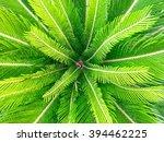 Green Sago Palm Leaves Pattern  ...