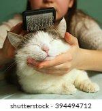 Teen Girl Brushing Siberian To...