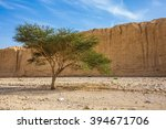 Small photo of Wood Acacia / Acacia gerrardii / in the Black Canyon. The stone desert in mountains of Eilat, Israel