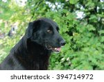 portrait of a black dog on a... | Shutterstock . vector #394714972