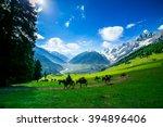Horses Grazing On A Hill Kashmir