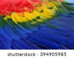Colorful Background Of Bird...