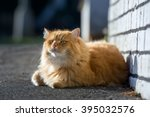Nice Ginger Cat Lying On The...