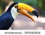 close up of exotic toucan bird... | Shutterstock . vector #395060836