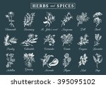 herbs and spices set. hand... | Shutterstock .eps vector #395095102