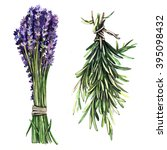 watercolor herbs lavender and... | Shutterstock . vector #395098432