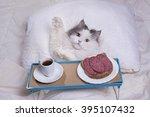 Stock photo fluffy cat got breakfast in bed 395107432