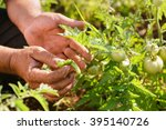 farming and cultivations in... | Shutterstock . vector #395140726