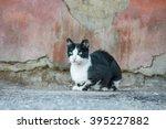 Stray Cat.black And White...