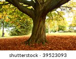 Large Chestnut Tree With Thick...