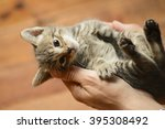 Stock photo cat 395308492