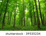trees in  forest | Shutterstock . vector #39535234