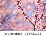cherry blossom. sakura in... | Shutterstock . vector #395431135