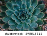 the symmetry of nature | Shutterstock . vector #395515816