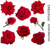 Stock photo collage of red roses isolated on white background 395655862