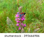 Bright butterfly on pink wild flower - stock photo