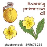 Evening Primrose. Hand Drawn...