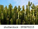 calm cactus desert sunset | Shutterstock . vector #395870215
