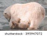 polar bear family | Shutterstock . vector #395947072