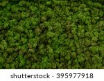 Green Moss Background Texture...