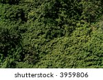 green leaf background   Shutterstock . vector #3959806