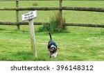 Keep Off The Grass Dog On Grass
