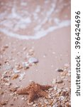 starfish on a sand background | Shutterstock . vector #396424696