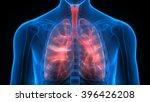 human body organs  lungs  | Shutterstock . vector #396426208