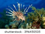 Lion Fish. Exotic Tropical Fis...