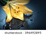 flower  lily  water droplets ...