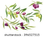 the olive branch olive tree... | Shutterstock . vector #396527515