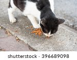 young cat is eating food from a ... | Shutterstock . vector #396689098