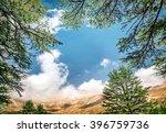 cedars of lebanon  beautiful... | Shutterstock . vector #396759736