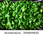 Young Baby Spinach Leaves In A...