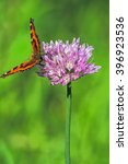 Small photo of Orange-black tortoise butterfly(Vanessa urticae) on a lilac flower chives(Allium schoenoprasum) on a blurred green background, close-up