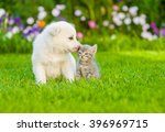 Stock photo puppy sniffing kitten on green grass 396969715