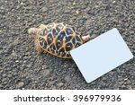 indian star turtle empty card... | Shutterstock . vector #396979936