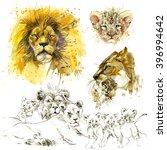 Lion Pride Illustration. Lion...