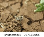 looking grasshopper sitting on... | Shutterstock . vector #397118056