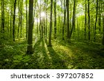 spring forest trees. nature... | Shutterstock . vector #397207852