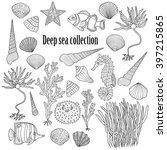 Sea Collection  Shells ...