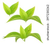 set of realistic green tea... | Shutterstock .eps vector #397230262